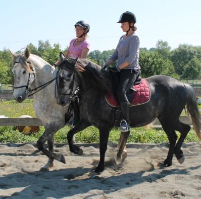 cours d'équitation adulte